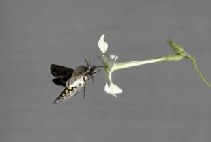 The finding provides hope that pollinating species may be able to rapidly adapt to environmental change and continue their essential role in helping crops to proliferate.